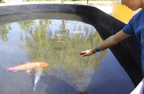peixes parque dos monges